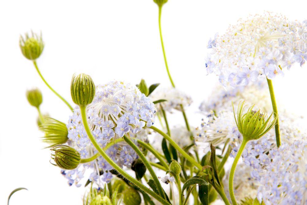 夏のプレゼントにおすすめの花