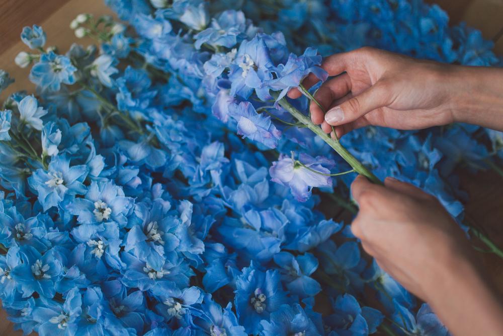 夏のプレゼントにおすすめの花 デルフィニウム