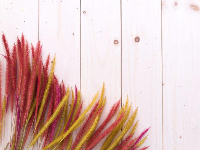 9月のウエディングにおすすめの花 グラミネ(稲穂)